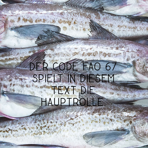 Fisch kommt doch aus dem Meer,oder?